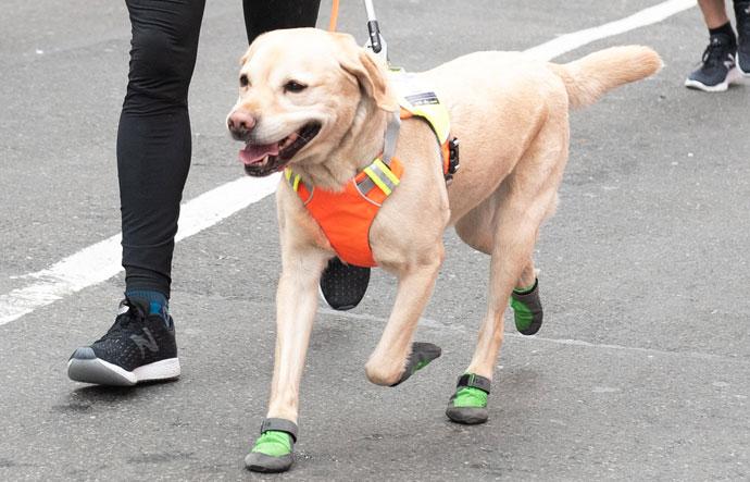 Medio Maratón de NYC